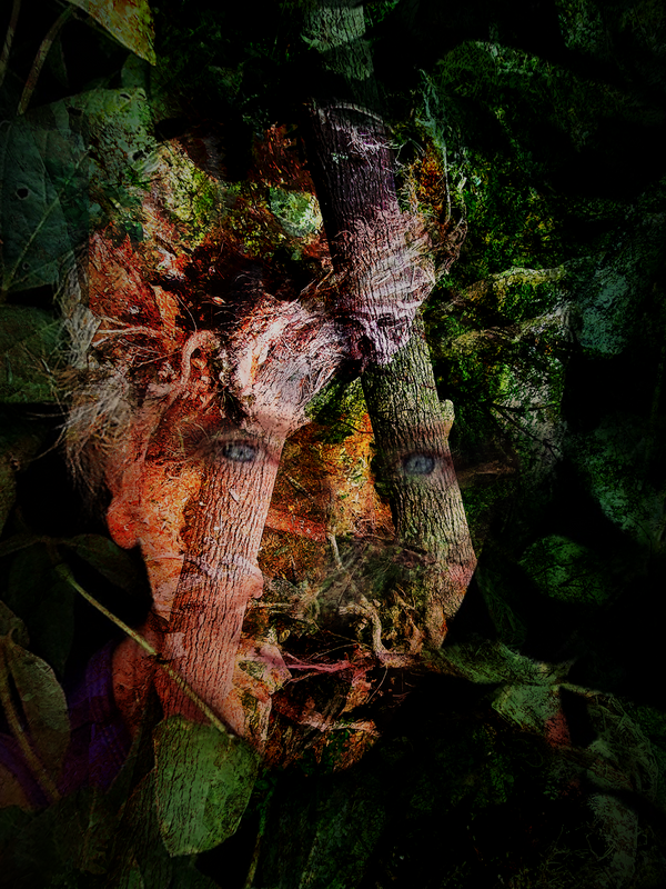 Cristiana MERGING FOREST