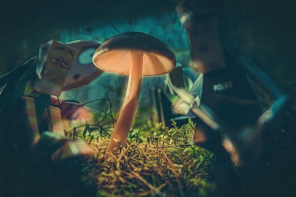 Mushroom light guarded